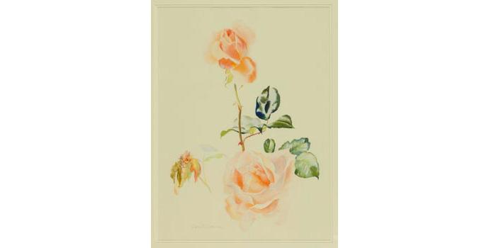 Ivor Coburn (1934-), Just Joey, 2003. Watercolour, 60.7 x 45 cm WCSI.2003.002