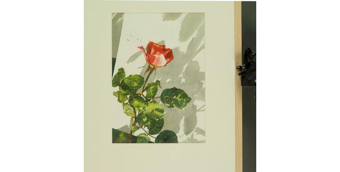 Jane Barry, Evening Rose, 2004. Watercolour on paper 42 x 29.7 cm, WCSI.2004.001