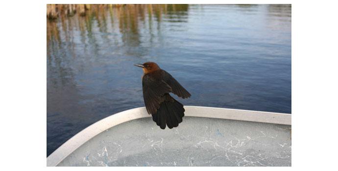 John Gerard (1974-), Reflected Self Portrait (Small Bird, Florida) NSPCI.2007.415