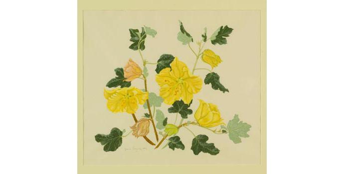 Grania Langrishe (1934-), Fremontia Californica, 1993. Gouache on paper, 40.5 x 46.5 cm, WCSI.1993